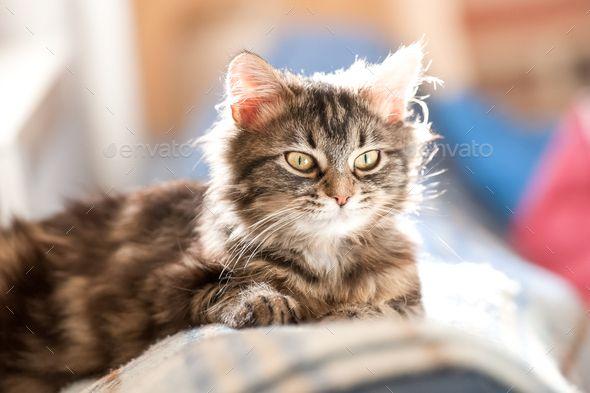 Tabby Kitten Tabby Kitten Tabby Cat Shots