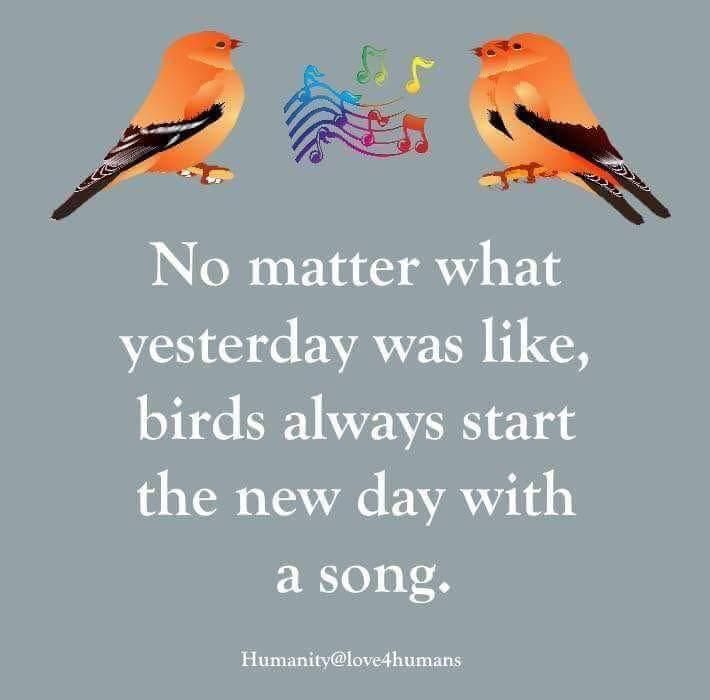 No Matter What Yesterday Was Like Birds Always Start The New Day With A Song Inspirational Memes Bird Quotes Songs