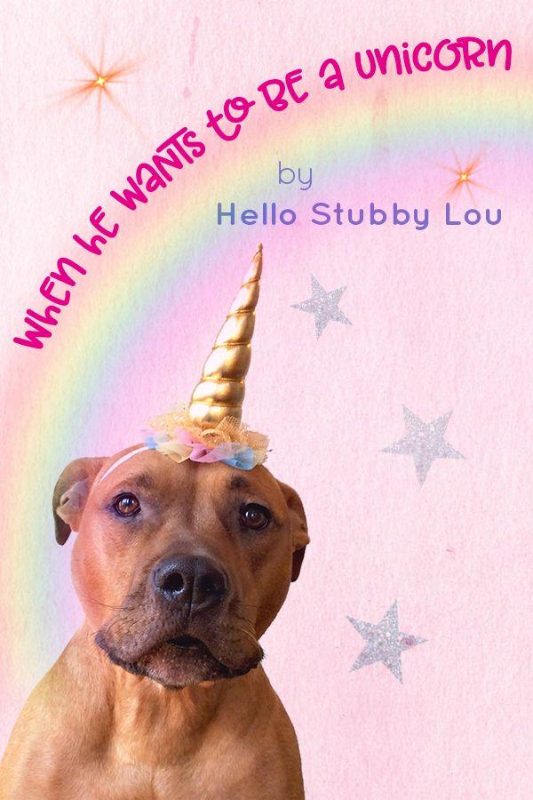 Cute Unicorn Headband For Dogs Cute Dog Birthday Party Gotcha