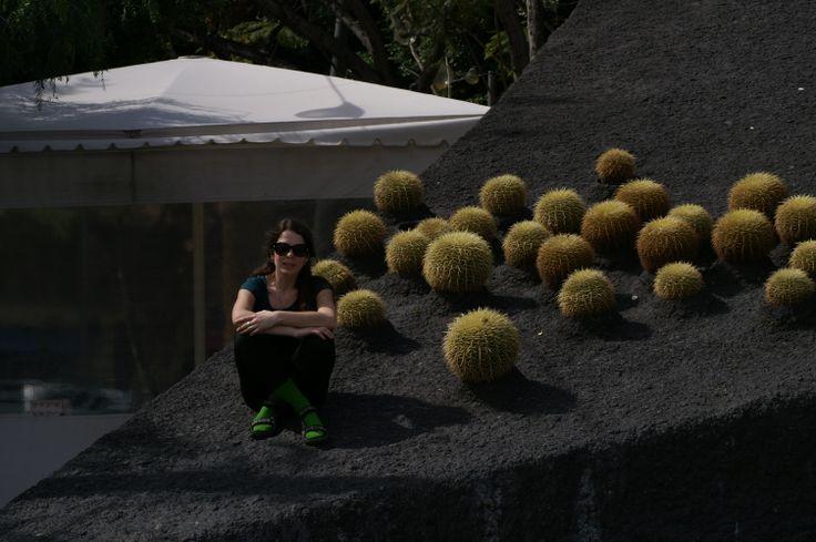 Installation with Echinocactus grusoni, Santa Cruz de Tenerife