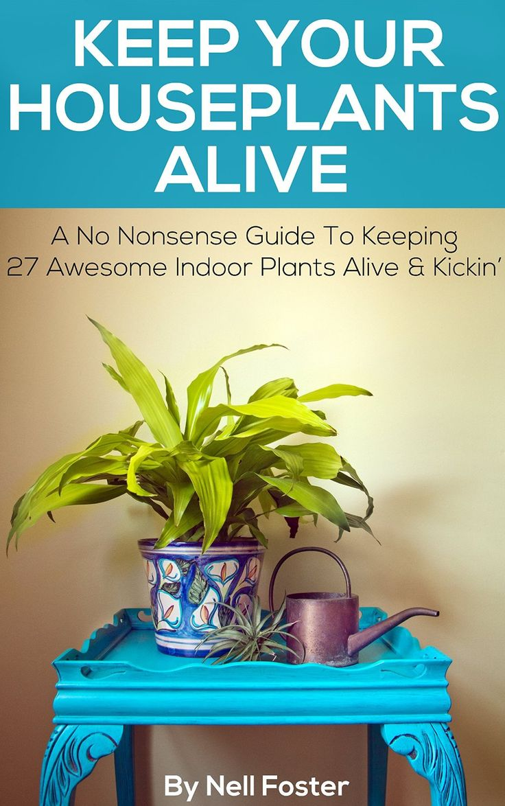 Keep Your Houseplants Alive A No Nonsense Guide To