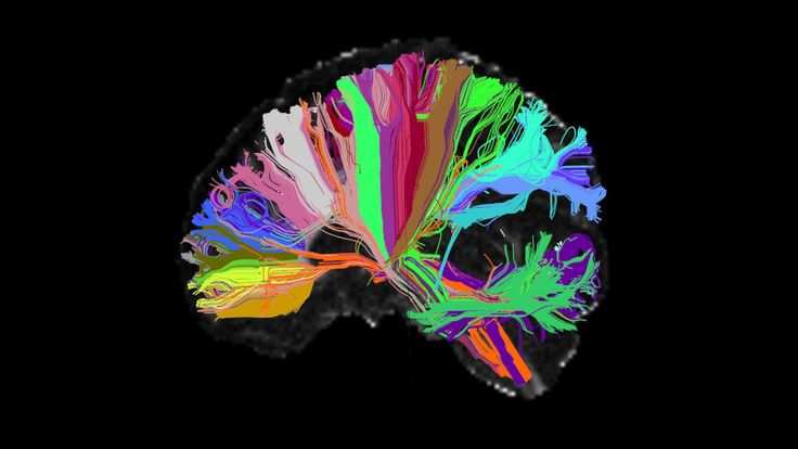 New research upends decades of neuroscience theory, paving the way for a deeper understanding of memory. Our brains instantly make two copies of each memory.
