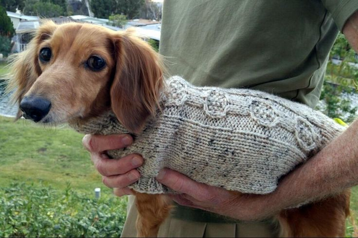 Looking for your next project? You're going to love EZ Banjo Cable Mini-Dachshund Sweater by designer Lenas Legacy.