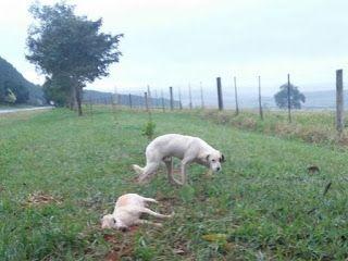 """""""O GRITO DO BICHO"""": Morador registra cão há dois dias ao lado de 'amig..."""