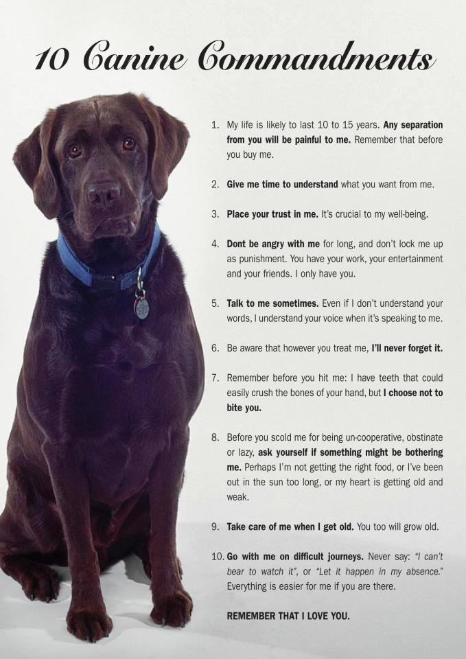 10 Canine Commandments - from http://www.labrescue.net/