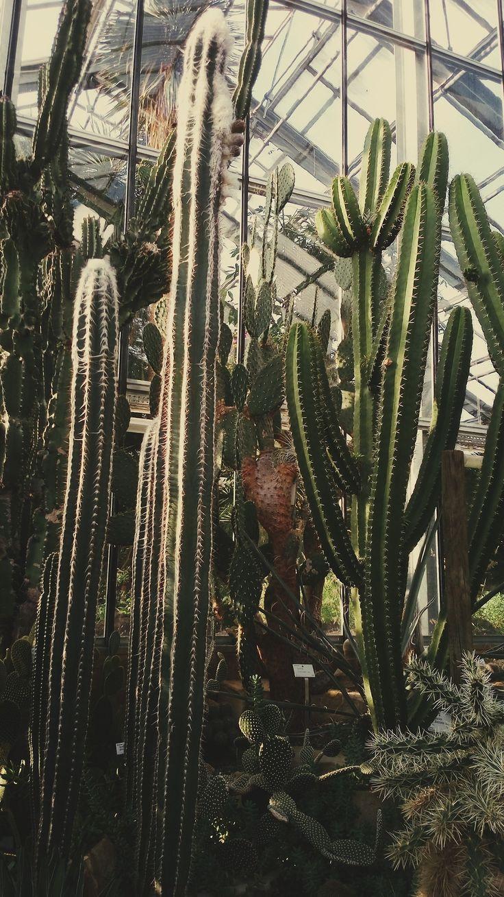 philopsychra:    CAU Kiel Botanical Garden