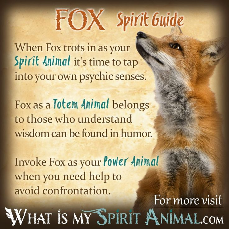 how to meet my animal spirit guide
