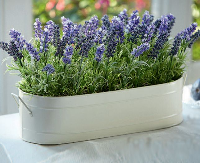 Image for Lavender Windowboxes - Buy any 2 and SAVE £10 from Bloom