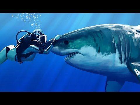 Женсовет: Интересное видео - акулы и люди