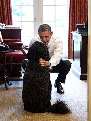 President Barack Obama with Dog Bo at White House: Photo