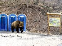 Toalete ecologice pentru urșii de pe Tâmpa