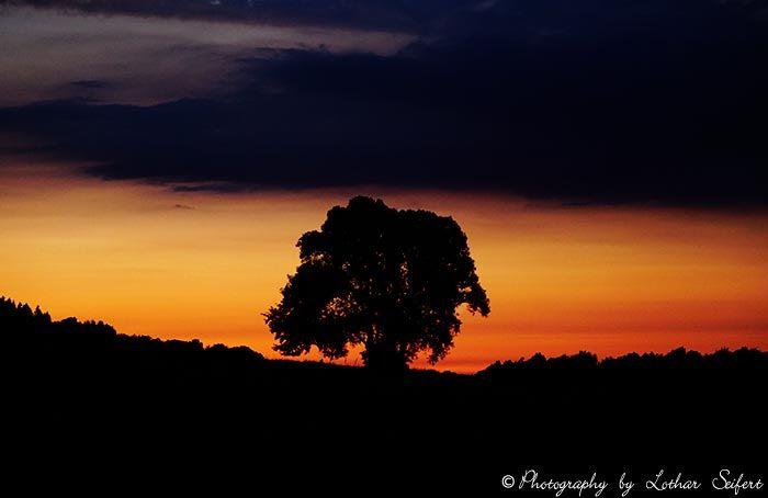 Salweide an einer Quelle am Abend beim Sonnenuntergang. Fotografie von Lothar Seifert