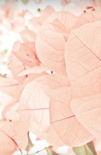 blush leaves