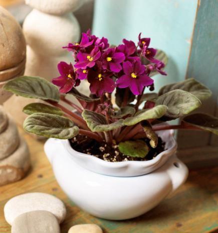 153 Best Gardening Indoor Plants Images On Pinterest 400 x 300