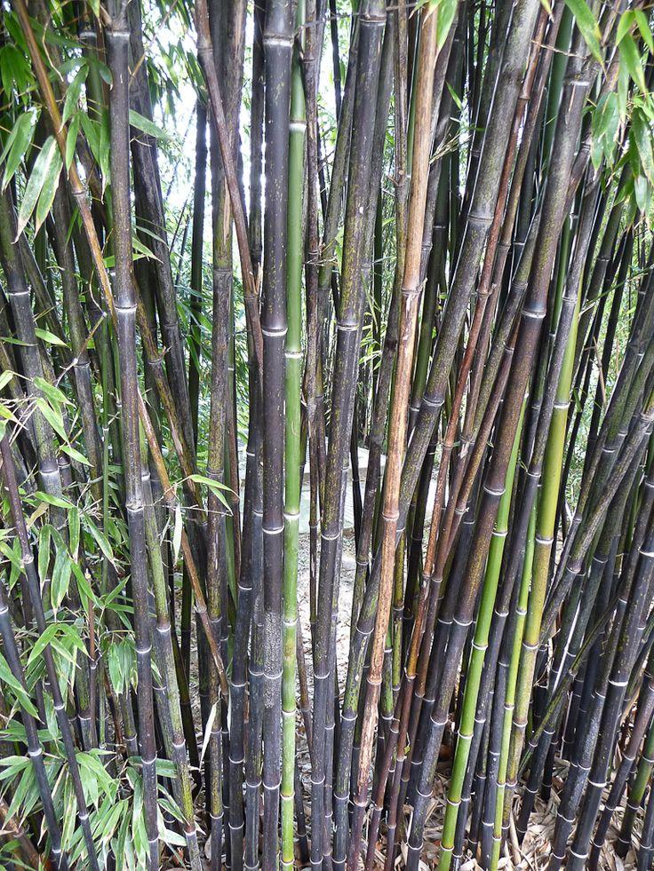 Jardin de bambou cannes jardin les bambous de - Jardin de bambou cannes ...