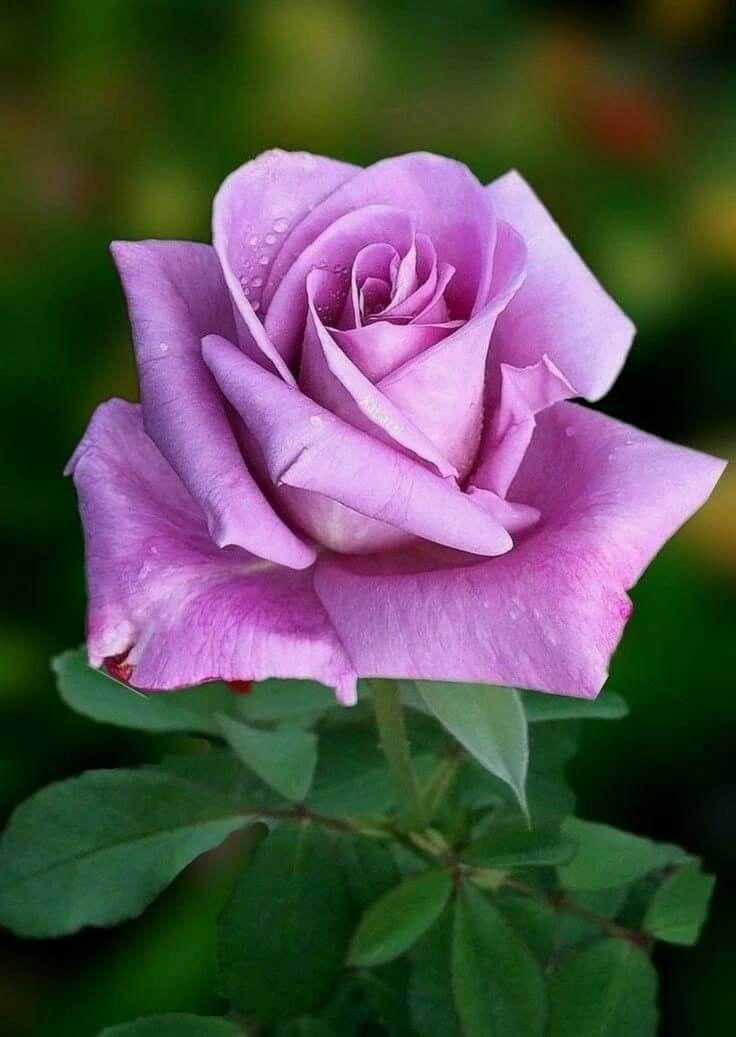 краю картинки розы всякие разные дешево фоторамки оптом