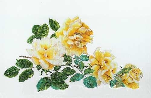 Gallery.ru / Фото #1 - 24 - kento / wiązanka żółtych róż