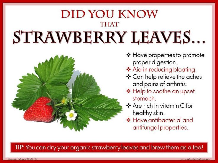 Strawberry leaves tea - benefits