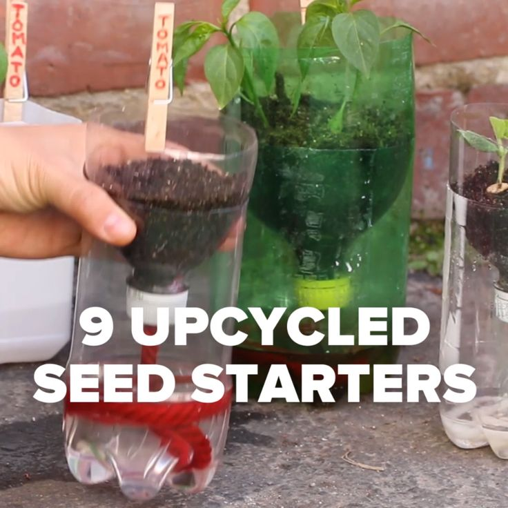 9 Upcycled Seed Starters ~ Reusing &a Recycling: Small plastic yogurt containers, glass jars, strawberry plastic containers, plastic milk jugs, plastic soda bottles, citrus rinds, paper egg cartons, newspaper, and paper towel &a toilet paper cardboard rolls.