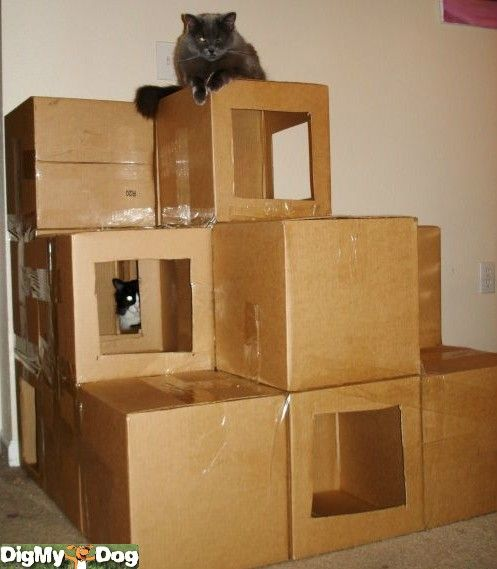 cat house Built out of boxes. A very creative & inexpensive way to entertain…