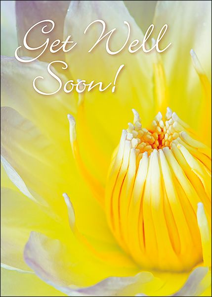 The 9 best greeting cards for witnesses images on pinterest buy get well greeting cards designed for jehovahs witnesses and featuring attractive artwork and scriptures m4hsunfo
