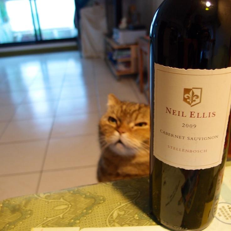 2009南非尼爾艾利斯,低價快醒,濃橡木味巧妙遮掩澀味,聚餐第一輪敬酒快飲適用。2009 Neil Ellis #SouthAfrica #wine & #cat Buffy #好市多 #costco #Taiwan
