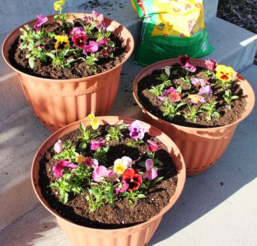 Planting Flower Pots 101 - a great intro for beginners, and great refresher for flower pros! :-)