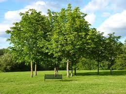 Treea Google Search Our Main Interest Importance Of Trees Winnersh Trees To Plant