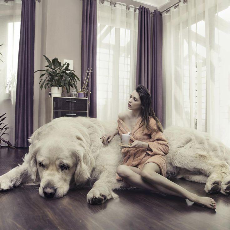 As 10 maiores raças de cachorro | eHow Brasil