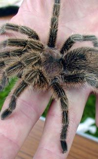 Fun Spider Facts for Kids - Interesting Information about Spiders