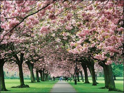 """The Stray ~ Harrogate, UK ~ """"This 200 acres of land wraps around the main urban """"old town"""" and is fiercely guarded by residents with a group set up specifically to safeguard it. The Stray exists for the people of the town and is a popular spot for picnicking, kite-flying, outdoor games and local football matches."""""""