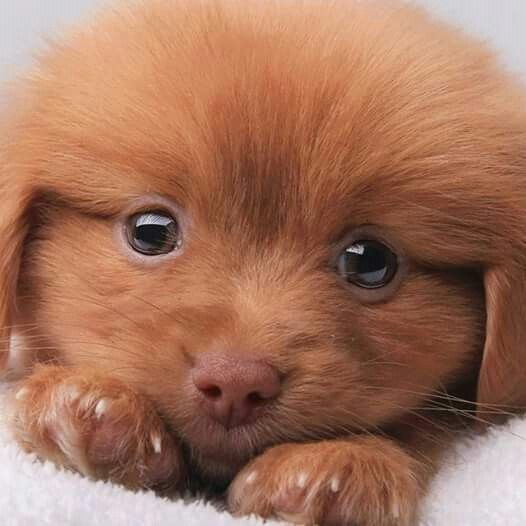 Best Cute Pets Images On Pinterest Adorable Animals Apple - Look like real baby animals actually incredibly realistic toys