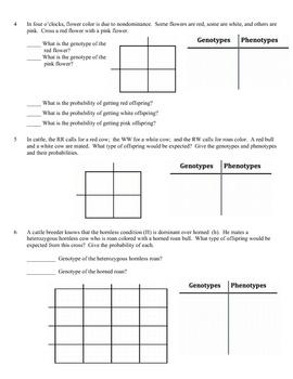 Printables Dihybrid Cross Worksheet dihybrid cross worksheet davezan problems abitlikethis