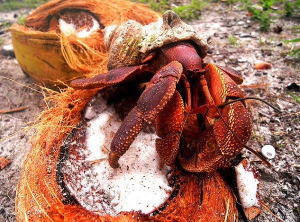 Coconut Oil Diet: The Weight-Slashing Diet that Heals