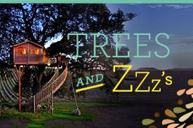 Trees & Zzzs