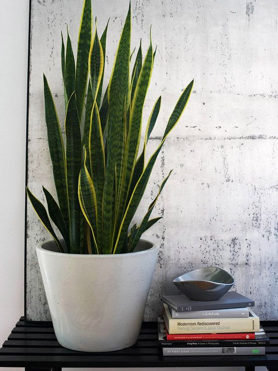 I have this bowl.  I need to be more creative and use it for something neat like this arrangement.