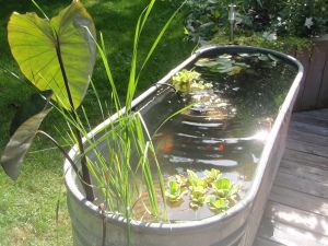 Diy container fish pond- love the long galvanized trough! Oh yes. Next year it will be mine