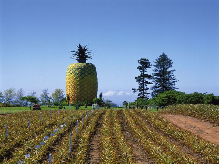 SOUTH AFRICA'S BIG PINEAPPLE ~ There's no better place to look out over the Eastern Cape's pineapple industry than from the top-floor observation deck of this nearly 55-foot-high fiberglass pineapple. After checking out the 360-degree view, visitors can watch a film about the area's agriculture, or head to the ground floor to buy pineapple jam and chutney.