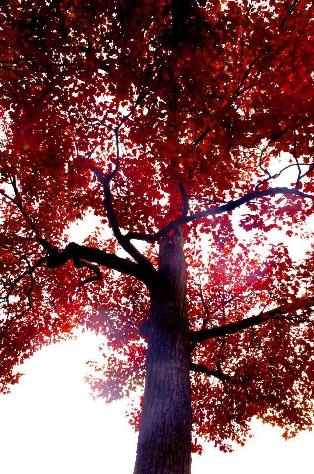 #autumn #fall #october #november #thanksgiving #wet #rain #bw #inspiration #red #leaves #beautiful