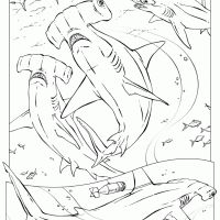 Kids will love to learn about the animal kingdom with these free printable coloring pages. #sharks