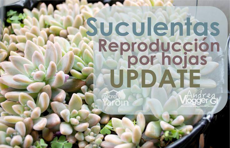 Este es un Update de nuestros videos de como reproducir suculentas por hoja y de como cortar las hojas de las suculentas para reproducirlas , ahora agregamos...