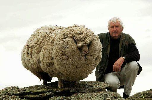 Jesusgreek: Shrek the Sheep