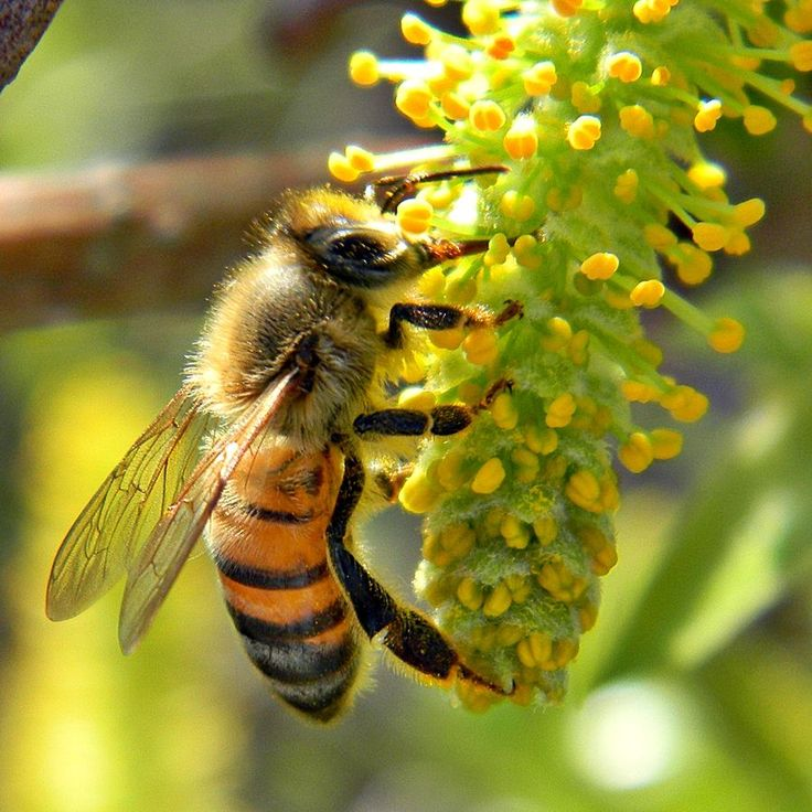 Why Are the Bees Dying? And What Can We Do?
