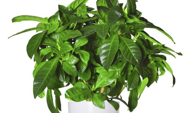 M s de 25 ideas incre bles sobre plantas de banano en - Vitaminas para plantas de interior ...