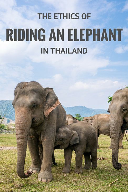Exploring the dark side of elephant tourism in Asia. If riding an elephant (or watching them perform) is on your bucket list, I urge you to think twice.