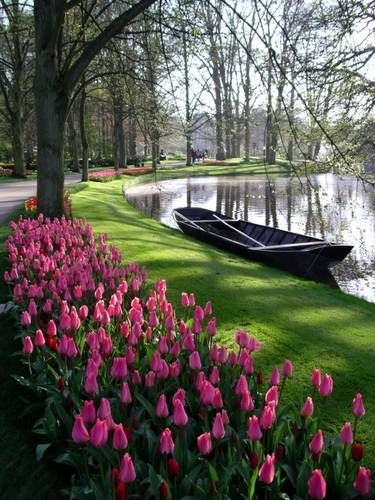 Places to travel- One day we will travel in March to - Keukenhof Gardens near Amsterdam - Famous Tulip and Flower Gardens