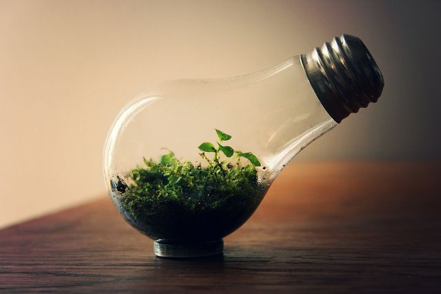 I just thinking how to put a plant into a lamp........