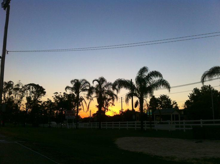 Sunset #palmtrees #NSW