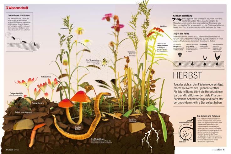 """Für den """"stern"""" hat KB im Mai 2012 vier Infografiken zum Leben einer Wiese in den vier Jahreszeiten erstellt. Hier: der Herbst"""