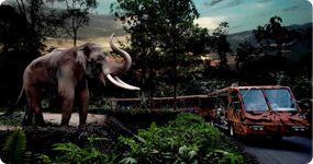 #Day1 - Night Safari - Seru juga bersafari malam hari di Singapore #SGTravelBuddy